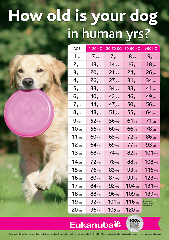 How Old is your Dog in Human Years