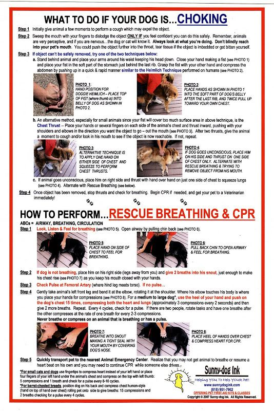 Chart to help when dog is chocking with dog cpr