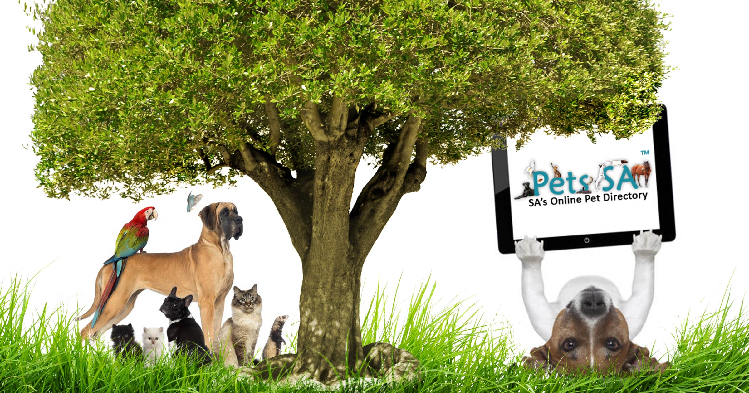 Classified ads 4 dogs, puppies, cats, pets in South Africa - Dogs