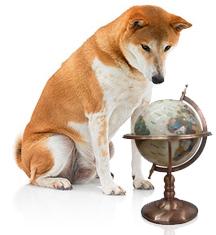 Pet Travel & Transport