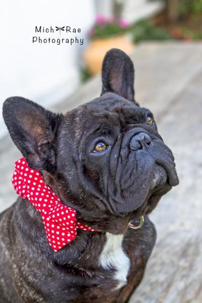 Bon Chance French Bulldogs