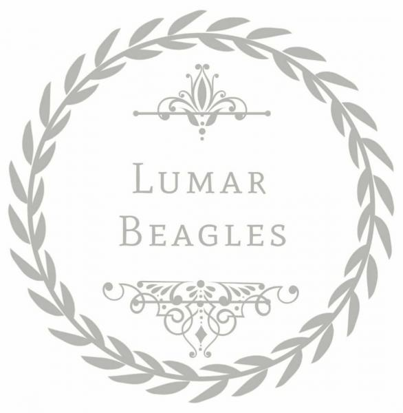 Lumar Beagles