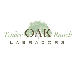 Tender Oak Ranch Labradors