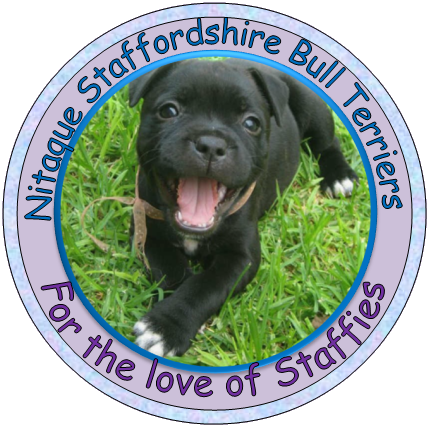 Nitaque Staffordshire Bull Terriers