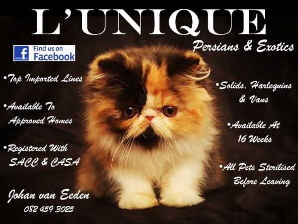 LUnique Persians & Exotics