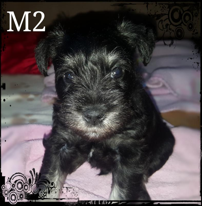 Male 2 - Black & Silver @ R6000