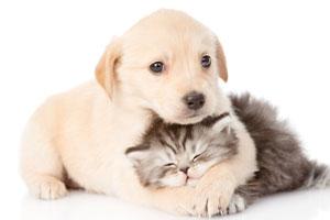 Cat Breeders